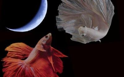 Nέα Σελήνη Μαρτίου – Ξυράφι στην πληγή της ανθρωπότητας