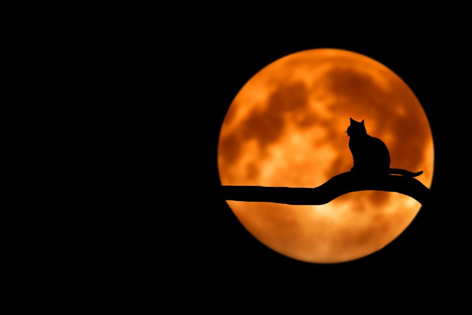 Μαύρη Σελήνη ή Λίλιθ. Η έκπτωτη, η αμαρτωλή, η πρώτη φεμινίστρια, η σκιά που μπορεί να οδηγήσει στο φως!